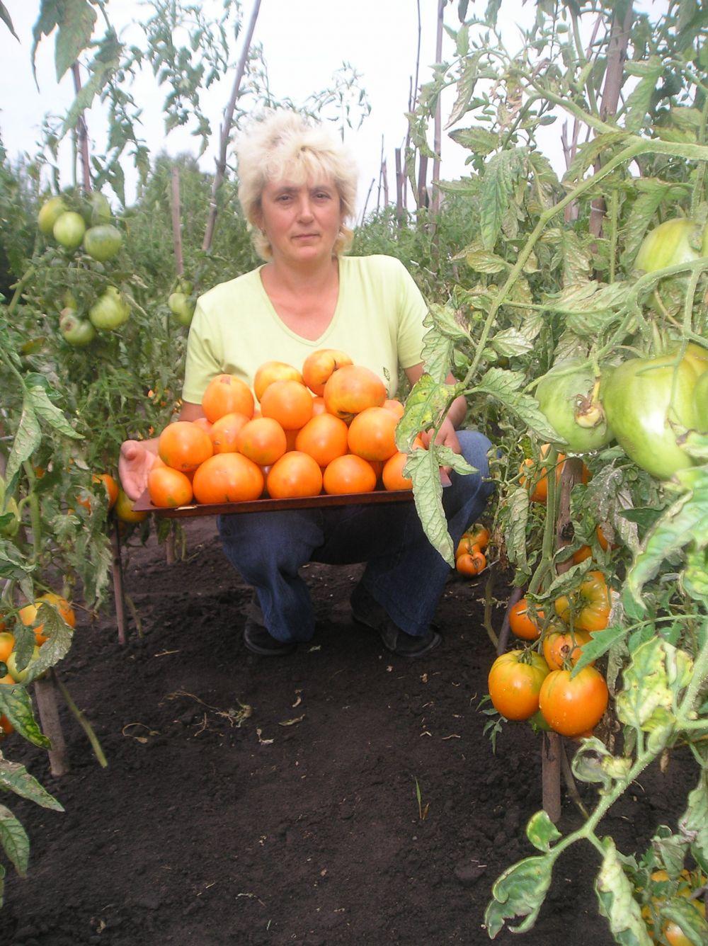 томат малиновый гигант отзывы фото